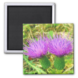 Creeping or Field Thistle Magnet