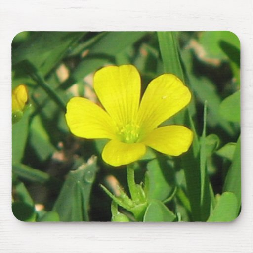 Creeping Oxalis Mouse Pads
