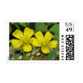 Creeping Oxalis Postage Stamps