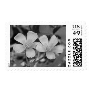 Creeping Oxalis Stamp