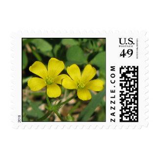 Creeping Oxalis Postage Stamp