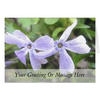 Creeping Phlox Flowers Card