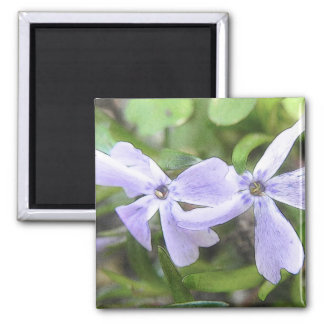 Creeping Phlox Flowers Magnet