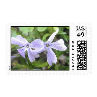 Creeping Phlox Flowers Stamps