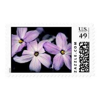 Creeping phlox stamp