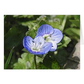 Creeping Speedwell (Veronica filiformis) Flowers Greeting Card