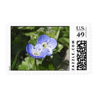 Creeping Speedwell (Veronica filiformis) Flowers Postage