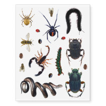 Creepy Crawly Bugs Spiders Caterpillars Insects Temporary Tattoos