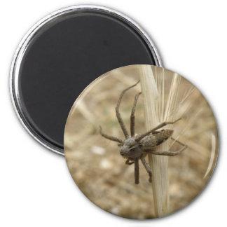 Creepy Crawly Spider Magnet