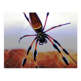 Creepy Crawly Spider on the Web Postcard