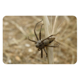 Creepy Crawly Spider Premium Magnet