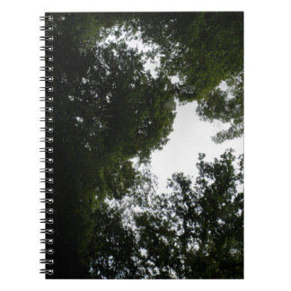 Creepy Forest Notebook