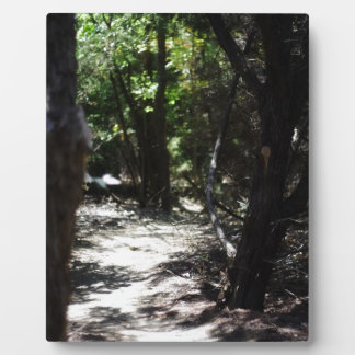 Creepy Forest Photo Plaques