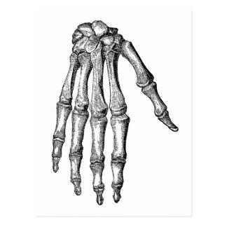 Creepy Skeleton Hand Postcard