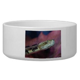 Creepy Snake Bowl