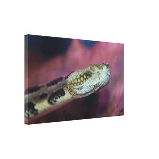 Creepy Snake Canvas Print