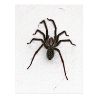 Creepy Spider Postcard