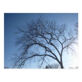 """Creepy Tree"" Postcard - photo © Les Becker, 2012"
