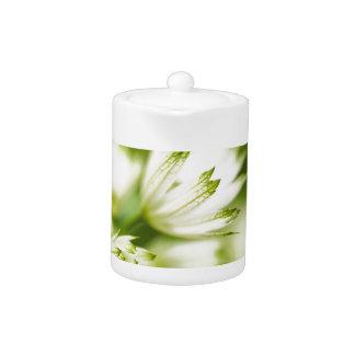 crema hermosa y flor verde del jardín del pantano