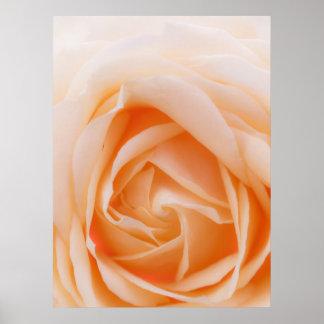 creme rose macro poster