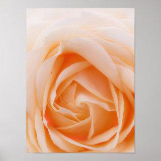 creme rose macro posters