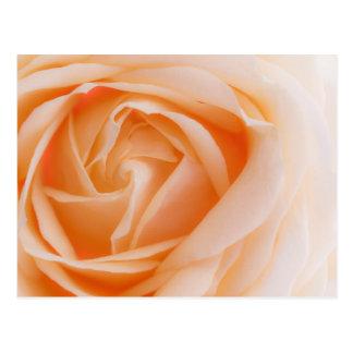 creme rose postcards