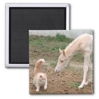 Cremello Companions 2 Inch Square Magnet