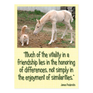 Cremello Companions Friendship Postcard