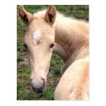 Cremello Walking Horse Post Card