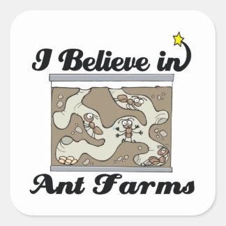 creo en granjas de la hormiga calcomanías cuadradass
