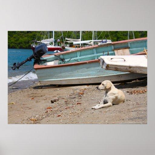 creole dog poster