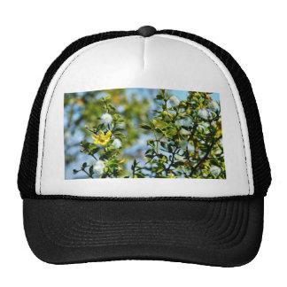 Creosote Bush In The Desert Trucker Hat