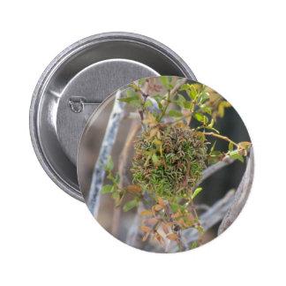 Creosote Gall Pinback Button