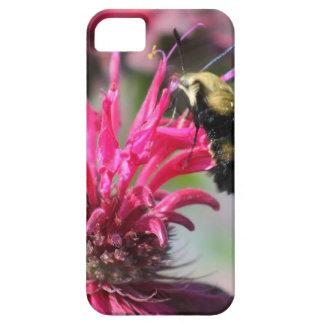 Crepe Myrtle Bloom iPhone 5 Cases