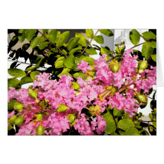 Crepe Myrtle Note Card