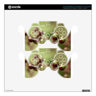 Crepe Myrtle Seed Pods Skins For PS3 Controllers