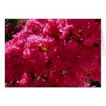 Crepe Myrtle Tree Magenta Flowers Card