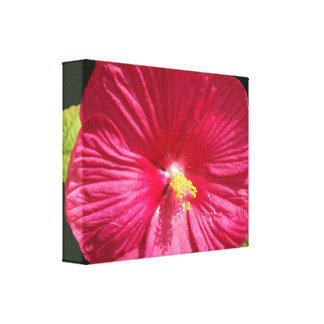 Crepe Red Hibiscus Canvas Print