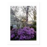 Crepúsculo de la primavera tarjeta postal