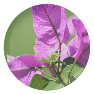 Crespón Myrtle púrpura Platos