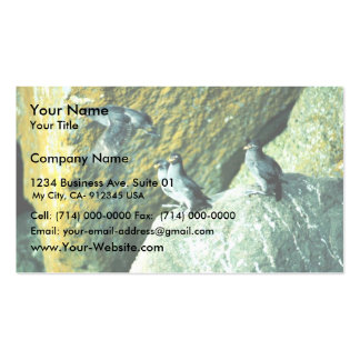 Crested Auklet Business Card
