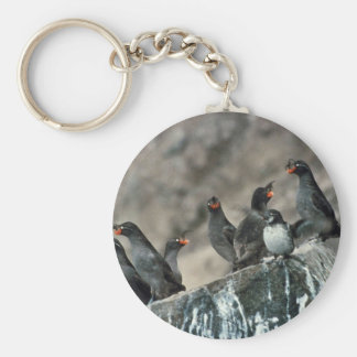 Crested Auklet Group on Cliff Rocks Basic Round Button Keychain