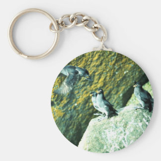 Crested Auklet Key Chains