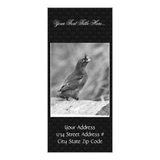 Crested Auklet Rack Card