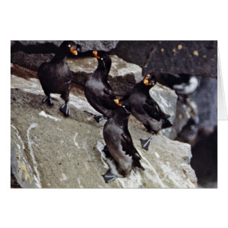 Crested auklets on rocks greeting card