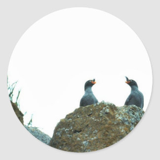 Crested Auklets Sticker