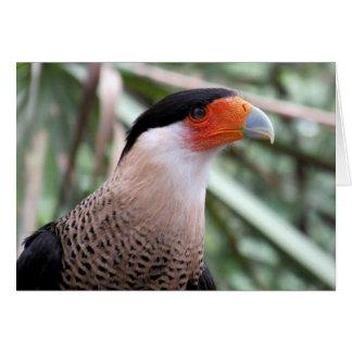 Crested Caracara (4492) Greeting Card