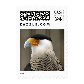 Crested Caracara Bird Postage Stamps Stamps