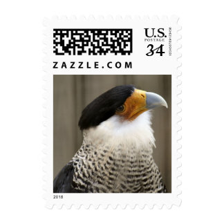 Crested Caracara Bird Postage Stamps Postage