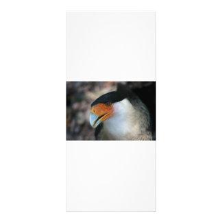 Crested Caracara hawk looking up at camera Rack Card Design